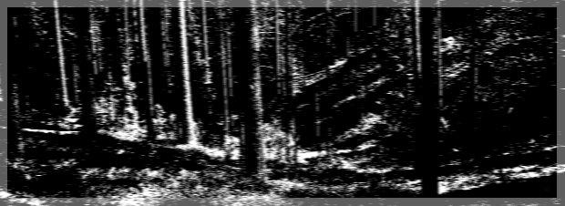 hate in the forest3