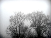 brouillarbre